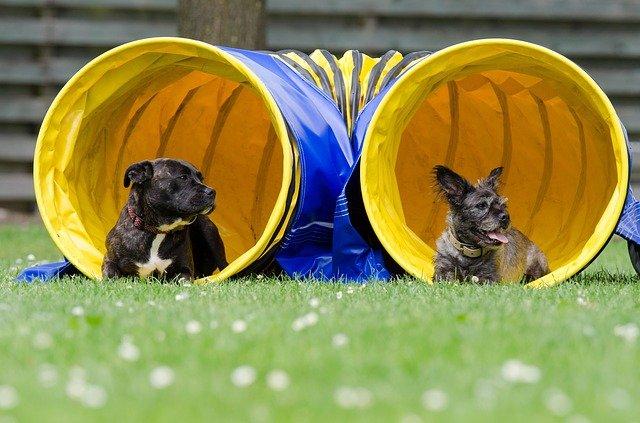 dva psi v tunelu